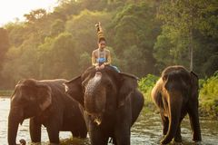 Thai Woman In Traditional Costume. Of Thailand and elephant royalty free stock image