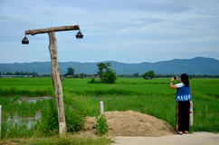 Thai woman use smart phone take photo view and rice field Royalty Free Stock Photos