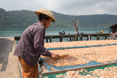 Thai woman working with dry shrimps in the fishing village. Koh Kood, Thailand Stock Photo