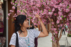 Thai women portrait with richly blossoming cherry tree, sakura flower Stock Images