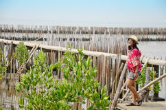 Thai women standing alone on the walkway bridge in Mangrove forest Royalty Free Stock Photos
