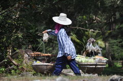 Thai worker carries fish eggs fruit and vegetables Royalty Free Stock Photo