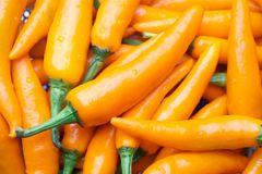 Thai Yellow Chilli Long , Thai chili pepper is very hot and flavorful, stock photography