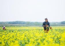 THAIBINH,越南- 2017年12月01日:工作在黄色花田改善的农夫 太平市是在的一个沿海省 免版税图库摄影