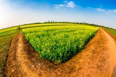 THAIBINH,越南- 2014年12月31日-与好的开花的Wintercress的农村风景调遣 库存图片