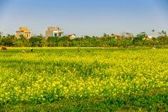 THAIBINH,越南- 2014年12月31日-与好的开花的Wintercress的农村风景调遣 免版税库存图片