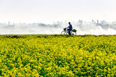THAIBINH,越南- 2014年12月31日-与非常好的开花的Wintercress的地方风景调遣 库存照片