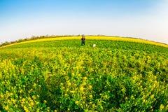 THAIBINH,越南- 2014年12月31日-与非常好的开花的Wintercress的地方风景调遣 免版税库存照片