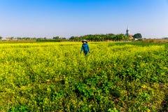 THAIBINH, VIETNAM - 31 décembre 2014 - habitants locaux recueillant des haricots sur les champs de marée Photo libre de droits