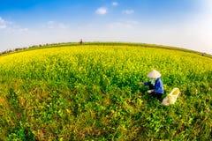 THAIBINH, VIETNAM - 31 décembre 2014 - paysage rural avec Wintercress de floraison gentil met en place Image stock