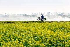 THAIBINH, VIETNAM - 31 de diciembre de 2014 - paisaje local con Wintercress floreciente muy bonito coloca Fotos de archivo