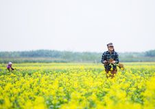 THAIBINH, VIETNAM - Dec 01, 2017 : Farmers working on a yellow flower field improvements. Thai Binh is a coastal province in the. Farmers working on a yellow royalty free stock photography