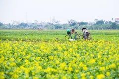 THAIBINH, VIETNAM - 01 Dec, 2017: Landbouwers die aan verbeteringen van een de gele bloemgebied werken Thaise Binh is een kustpro stock afbeelding