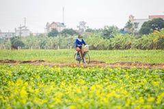 THAIBINH, VIETNAM - 01 Dec, 2017: Landbouwers die aan verbeteringen van een de gele bloemgebied werken Thaise Binh is een kustpro royalty-vrije stock foto