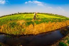 THAIBINH, VIETNAM - DECEMBER 31, 2014 - Landelijk landschap met aardige bloeiende Wintercress-gebieden Royalty-vrije Stock Foto's