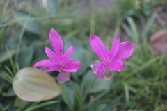 Thaiflowers03 στοκ φωτογραφίες