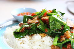Thaifood del krob del MOO del na de ka de la pista Foto de archivo libre de regalías