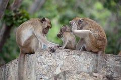 Thailändische Affefamilie im thailändischen Tempel Lizenzfreie Stockbilder