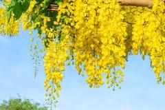 Thailändische Blume der Blütezeit stockbilder