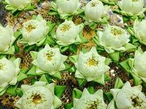 Thailändische Blume des weißen Lotos Stockfotos