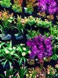 Thailändische Blume des weißen Lotos Lizenzfreie Stockfotos