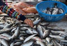 Thailändische Frau, die frische Fische am lokalen Markt in Thailand wählt Stockbilder