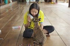 Thailändische Frau zieht Babytiger mit Milch in Saiyok, Thailand ein stockfotos