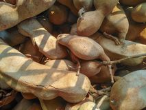 Thailändische Fruchttamarinde stockfoto