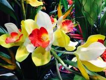 Thailändische gelbe Orchideenblume Lizenzfreie Stockbilder
