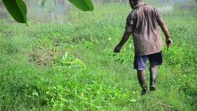 Thailändische Landwirterntewinde am Garten stock footage