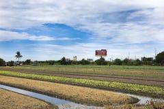 Thailändische Leute bereiten Land für Plantagenanlage und -gemüse vor Lizenzfreies Stockfoto
