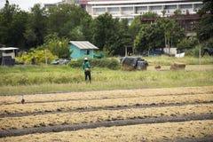 Thailändische Leute bereiten Land für Plantagenanlage und -gemüse vor Stockfoto