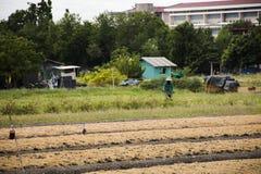 Thailändische Leute bereiten Land für Plantagenanlage und -gemüse vor Stockfotografie