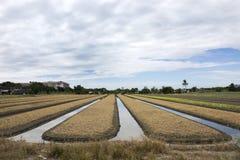 Thailändische Leute bereiten Land für Plantagenanlage und -gemüse vor Lizenzfreie Stockbilder