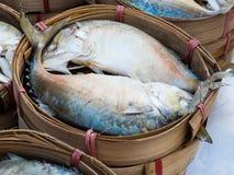 Thailändische Makrele gedämpft im Bambuskorb Lizenzfreie Stockfotos