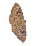 Thailändische Motte Stockfotos