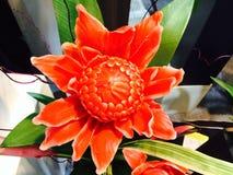 Thailändische orange Orchideenblume Stockbild