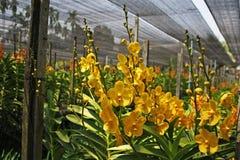 Thailändische Orchidee Flowers-27 Stockbilder