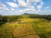 Thailändische Reisfelder der Vogelperspektive Stockfotos