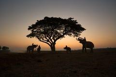 THAILÄNDISCHE Schattenbildelefanten auf dem Feld- und Baumsonnenaufgang backgrou Stockbilder