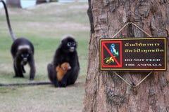 Thailändische und englische Sprachen, ziehen den Tieren Zeichen kein Lizenzfreies Stockfoto