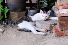 Thailändische weiße braune Katze, die zur Kamera mit zwei Farben von Augen schläft und schaut Lizenzfreie Stockfotos