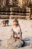 Thailändischer Affe Lizenzfreies Stockfoto