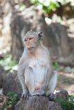 Thailändischer Affe-Hügel Stockbilder