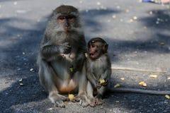 Thailändischer Affe Thailand Lizenzfreie Stockbilder