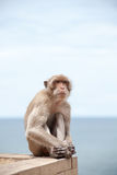 Thailändischer Affe und das Meer Stockbild