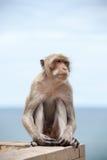 Thailändischer Affe und das Meer Lizenzfreie Stockbilder