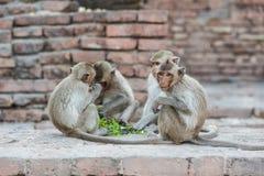 Thailändischer asiatischer wilder Affe, der verschiedene Tätigkeiten tut Lizenzfreie Stockfotografie