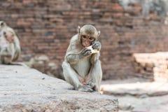 Thailändischer asiatischer wilder Affe, der verschiedene Tätigkeiten tut Lizenzfreie Stockfotos