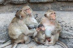 Thailändischer asiatischer wilder Affe, der verschiedene Tätigkeiten tut Lizenzfreies Stockfoto